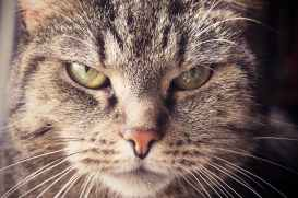 animal animal portrait animal world annoyed